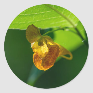 Spotted Jewelweed Yellow Wildflower Round Stickers