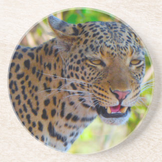Spotted Leopard Coaster