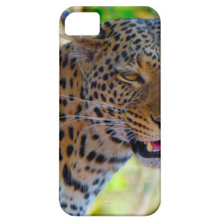Spotted Leopard iPhone 5 Cases