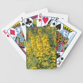 Spotted loosestrife (Lysimachia punctate). Poker Deck