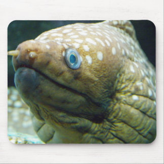 Spotted Moray Eel Mouse Pad