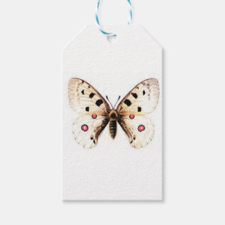 Spotted moth gift tags