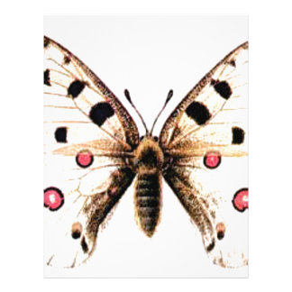 Spotted moth letterhead