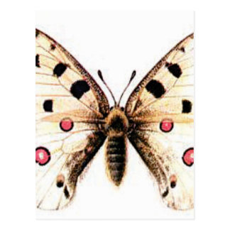 Spotted moth postcard
