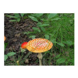 Spotted Mushroom Postcard