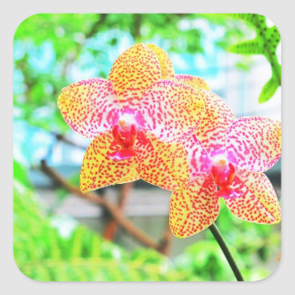 Spotted Orchids Square Sticker