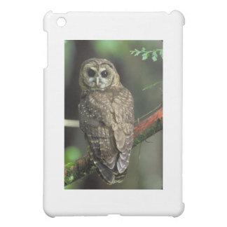 Spotted owl iPad mini cases