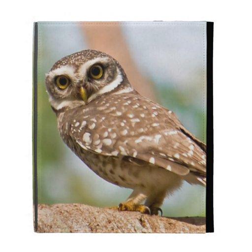 Spotted owl on morning flight. iPad folio case