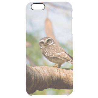 Spotted owl on morning flight. clear iPhone 6 plus case