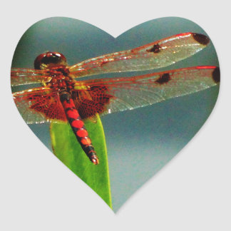 Spotted  Red and Black Dragonfly Heart Sticker