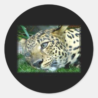 Spotted Round Sticker
