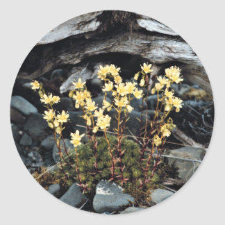 Spotted Saxifrage Sticker
