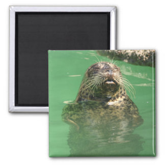 spotted seal square magnet