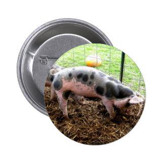 Spotty Piggy 2 Inch Round Button