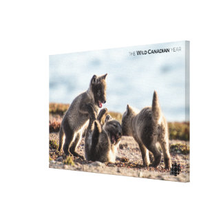 Spring - Arctic Fox Canvas Print