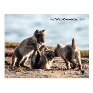 Spring - Arctic Fox Postcard