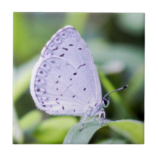 Spring Azure Butterfly Ceramic Photo Tile