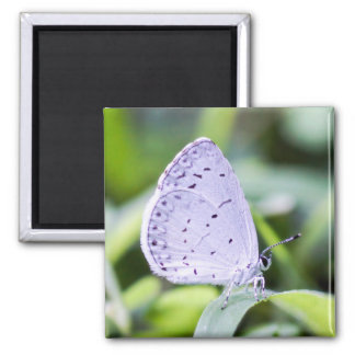 Spring Azure Butterfly Magnet
