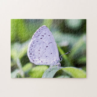 Spring Azure Butterfly on Flower Puzzle
