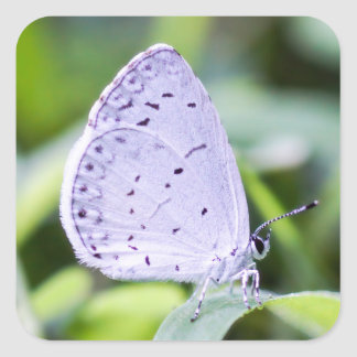 Spring Azure Butterfly Sticker