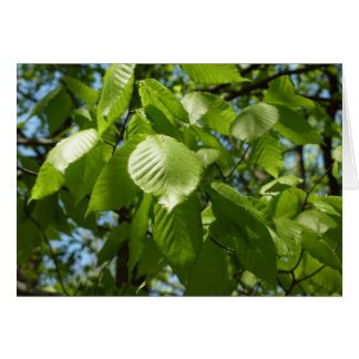 Spring Birch Leaves Green Tree Card