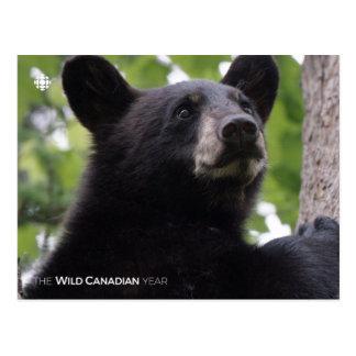 Spring - Black Bear Postcard