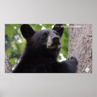 Spring - Black Bear Poster