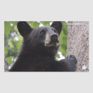 Spring - Black Bear Sticker