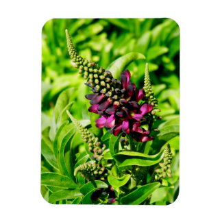 Spring Bloom Magnet