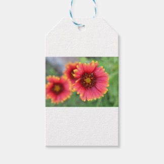 Spring Bloom Pt 2 Gift Tags