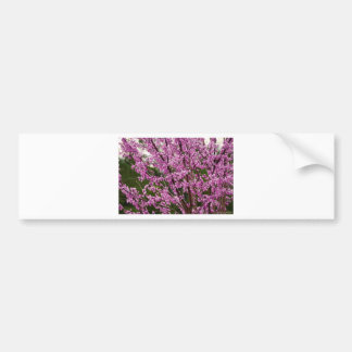 Spring Blooming Eastern Redbud Blossoms Bumper Sticker
