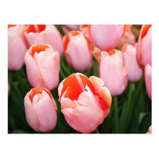 Spring blooms postcard