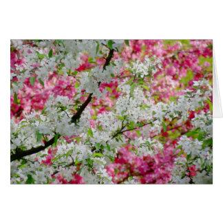 Spring Blossom Colours Card