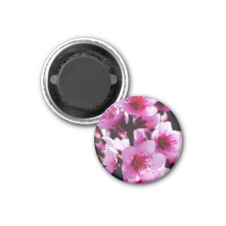 Spring Blossoms 1 Inch Round Magnet