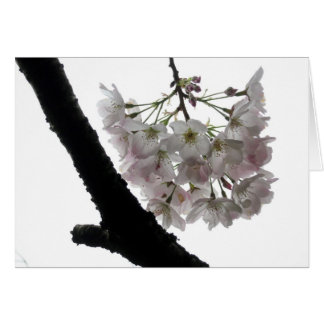 Spring Blossoms, Golden Gate Park Card