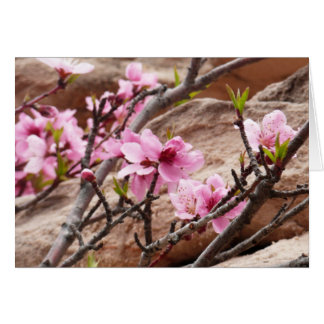 Spring Blossoms on Zion Red Rocks Card
