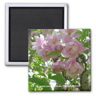 Spring Blossoms Square Magnet