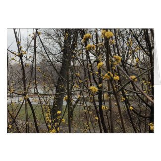 Spring Blossoms Trees Central Park Lake New York Card