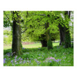Spring Bluebell Forest Print