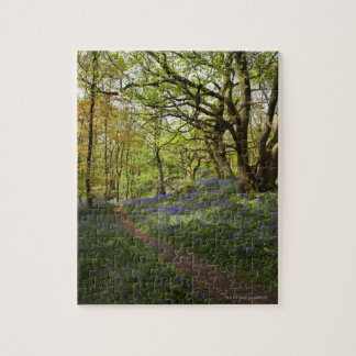 Spring bluebell woods puzzle