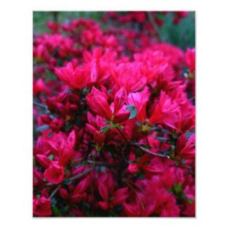 """Spring Boom""  (Photo Print) Photo"