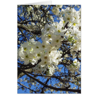 Spring Branches Card
