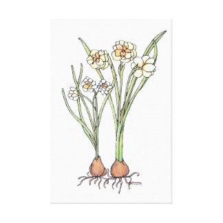 Spring Bulbs Canvas Print
