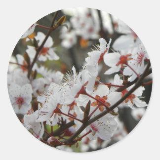 Spring Canberra Round Sticker