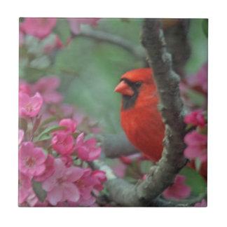 Spring cardinal tile
