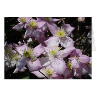Spring - Clematis Montana Note Card