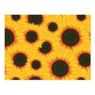 Spring colorful pattern sunflower postcard
