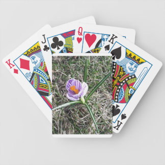 spring crocus bicycle playing cards