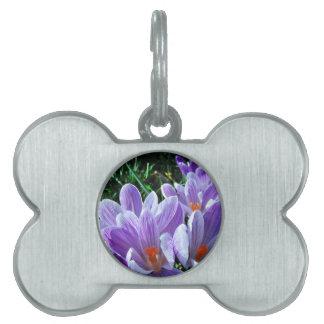 Spring Crocus Purple Pet ID Tags