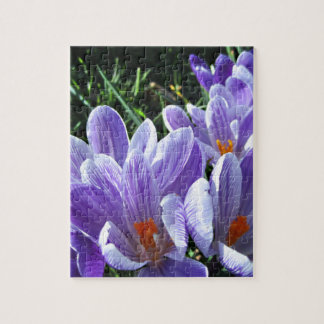 Spring Crocus Purple Puzzles